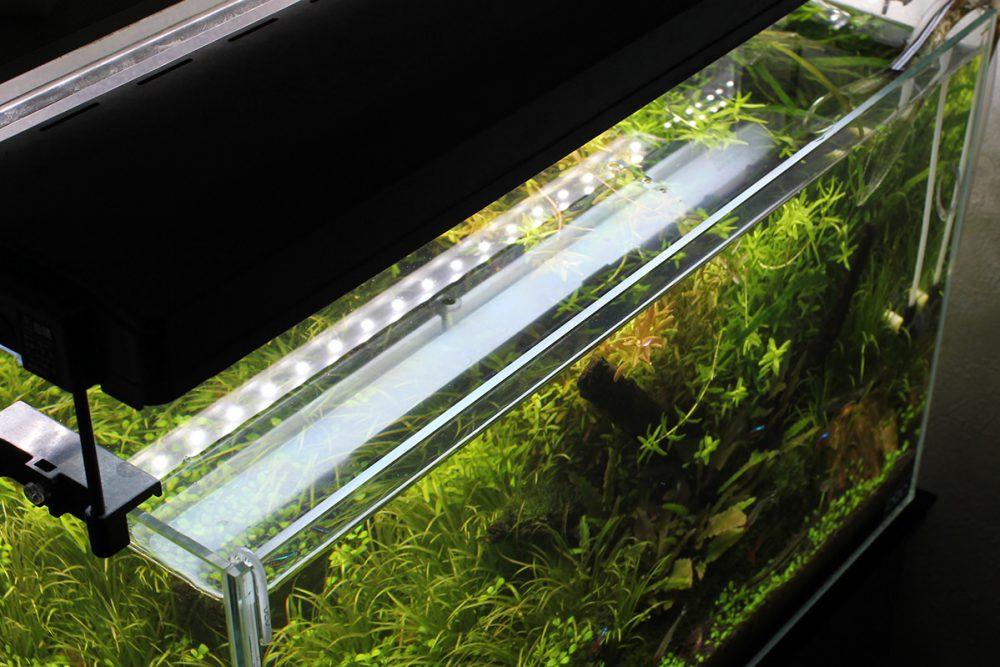 太陽光ではダメ?水槽用照明・ライトの必要性と理想的な点灯時間