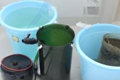 外部式フィルターのろ過槽、ホースの掃除方法とタイミング
